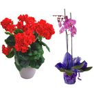 send birthday plants and orchid pot to vietnam