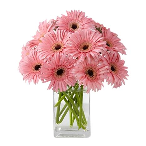 one dozen pink gerbera's with free vase to vietnam