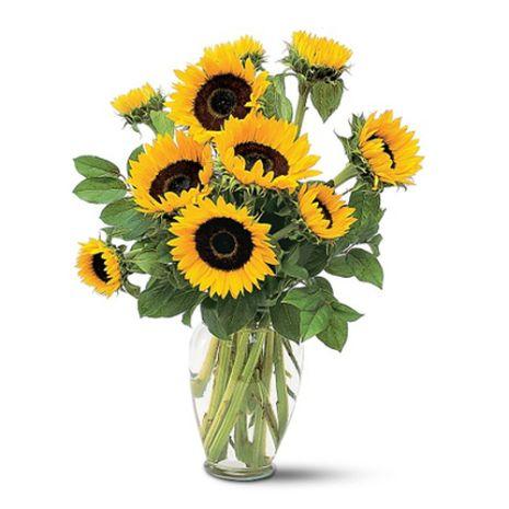 sunflower in vase to vietnam